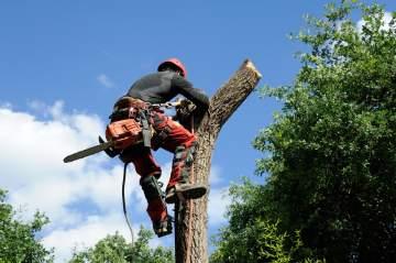 Élagage d'arbres à proximité de Dax